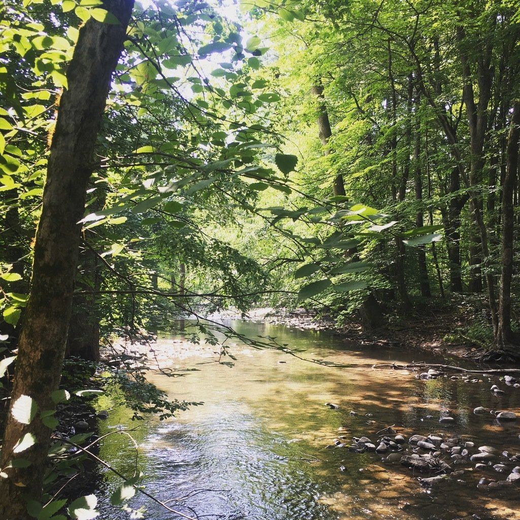 The creek at Rondout Valley Thousand Trails campground
